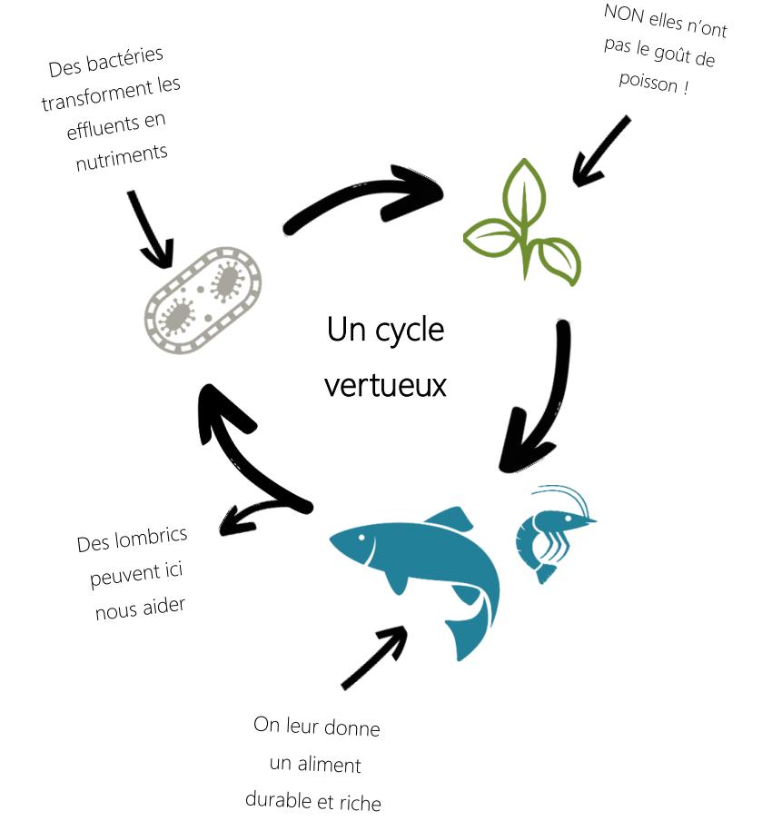 Schema aquaponie